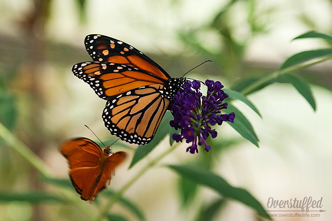 The original butterfly house of Mackinac Island is a popular and inexpensive tourist destination